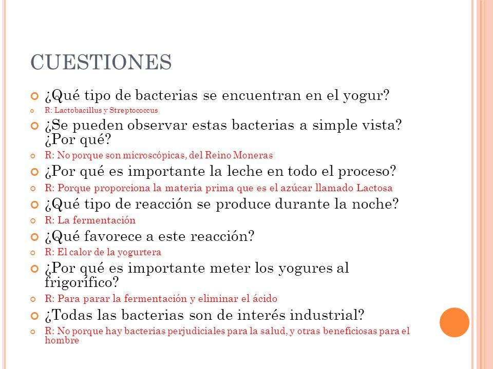 CUESTIONES ¿Qué tipo de bacterias se encuentran en el yogur