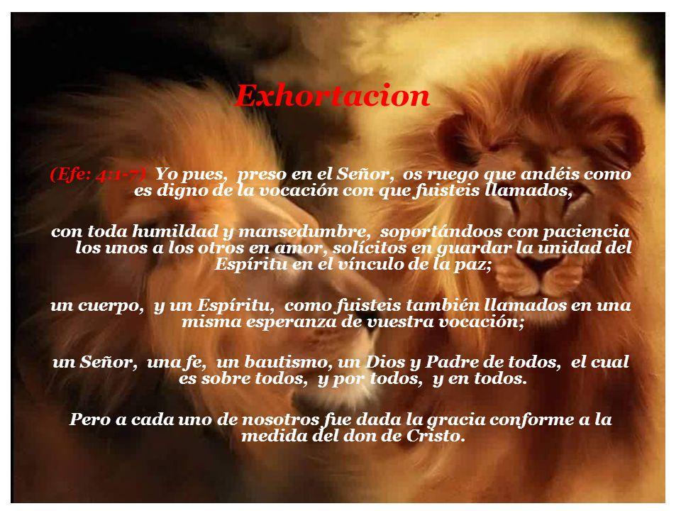 Exhortacion
