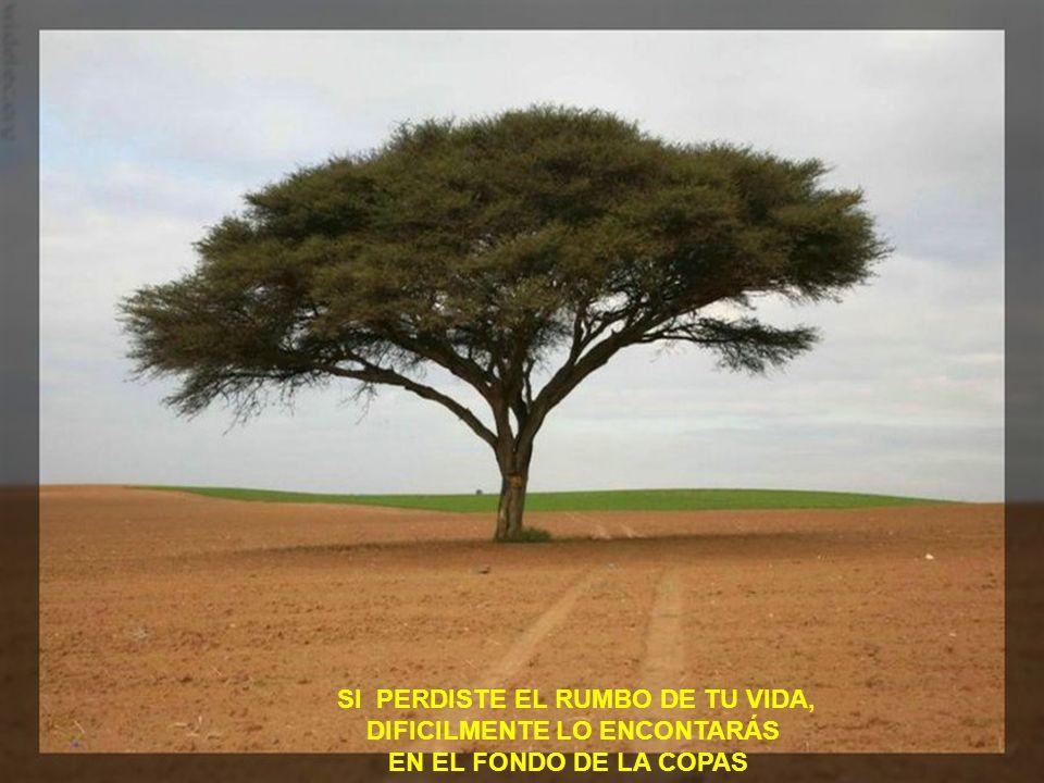 SI PERDISTE EL RUMBO DE TU VIDA, . DIFICILMENTE LO ENCONTARÁS