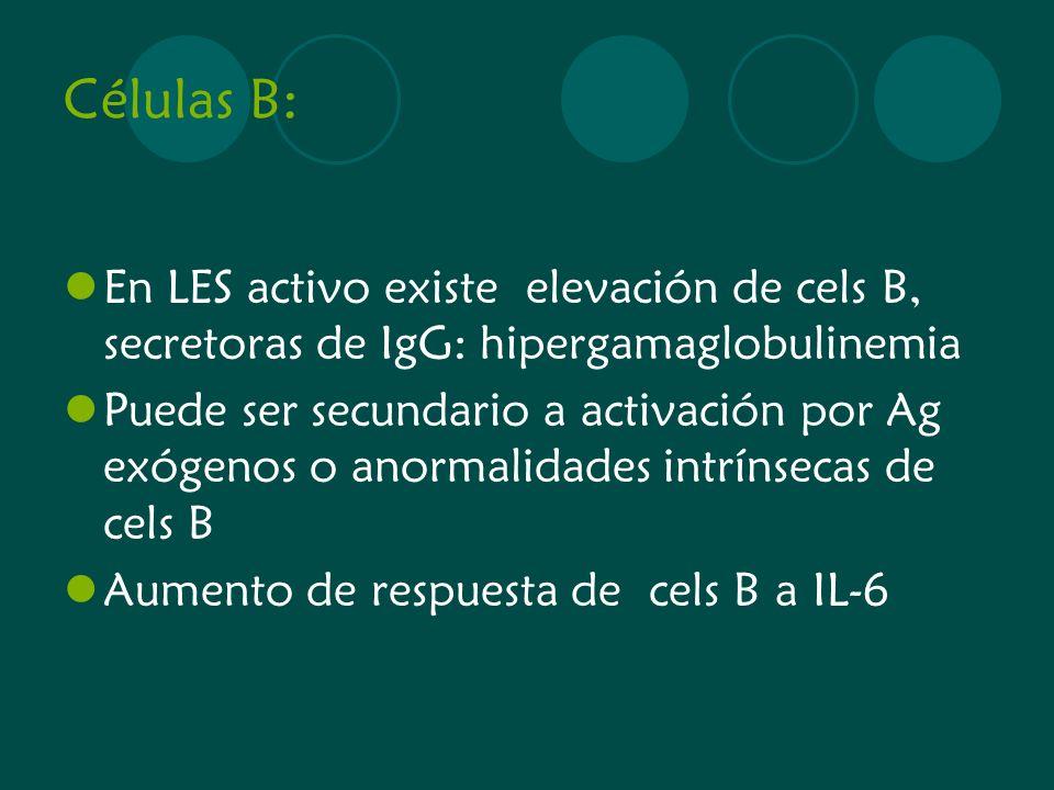 Células B: En LES activo existe elevación de cels B, secretoras de IgG: hipergamaglobulinemia.