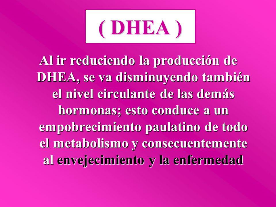 ( DHEA )