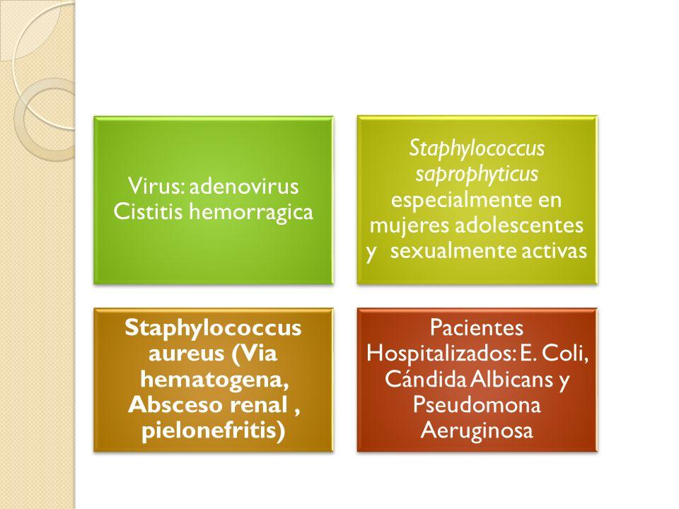 Staphylococcus aureus (Via hematogena, Absceso renal , pielonefritis)
