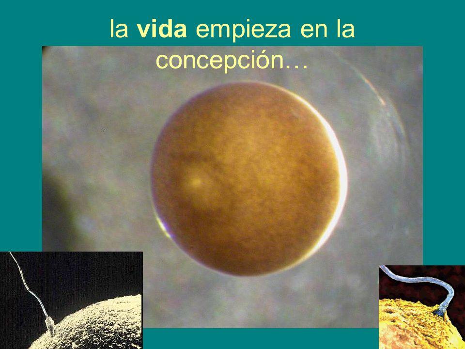 la vida empieza en la concepción…