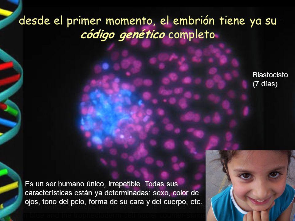 desde el primer momento, el embrión tiene ya su código genético completo