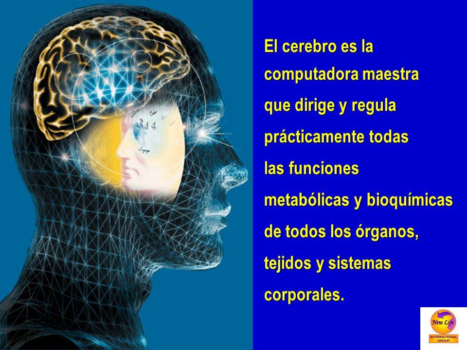 El cerebro es la computadora maestra. que dirige y regula. prácticamente todas. las funciones. metabólicas y bioquímicas.