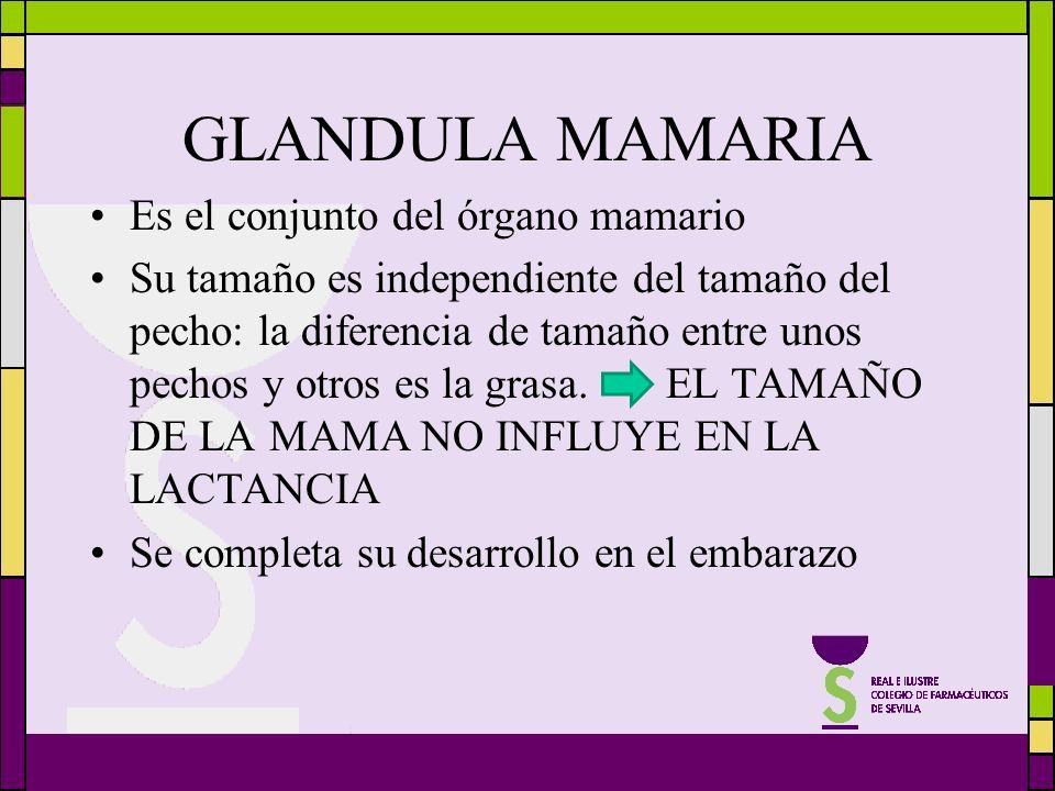 GLANDULA MAMARIA Es el conjunto del órgano mamario