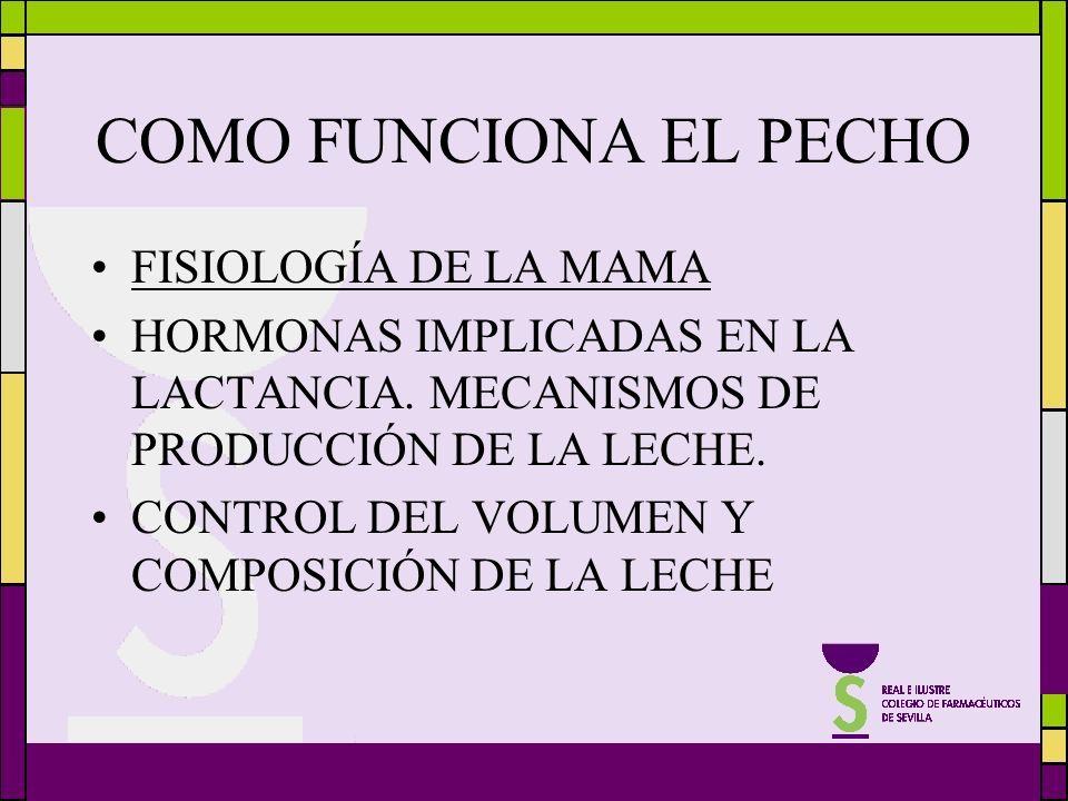 COMO FUNCIONA EL PECHO FISIOLOGÍA DE LA MAMA