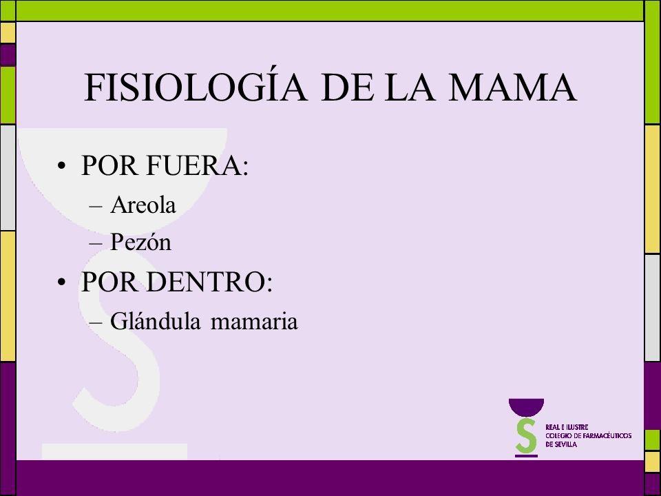 FISIOLOGÍA DE LA MAMA POR FUERA: POR DENTRO: Areola Pezón