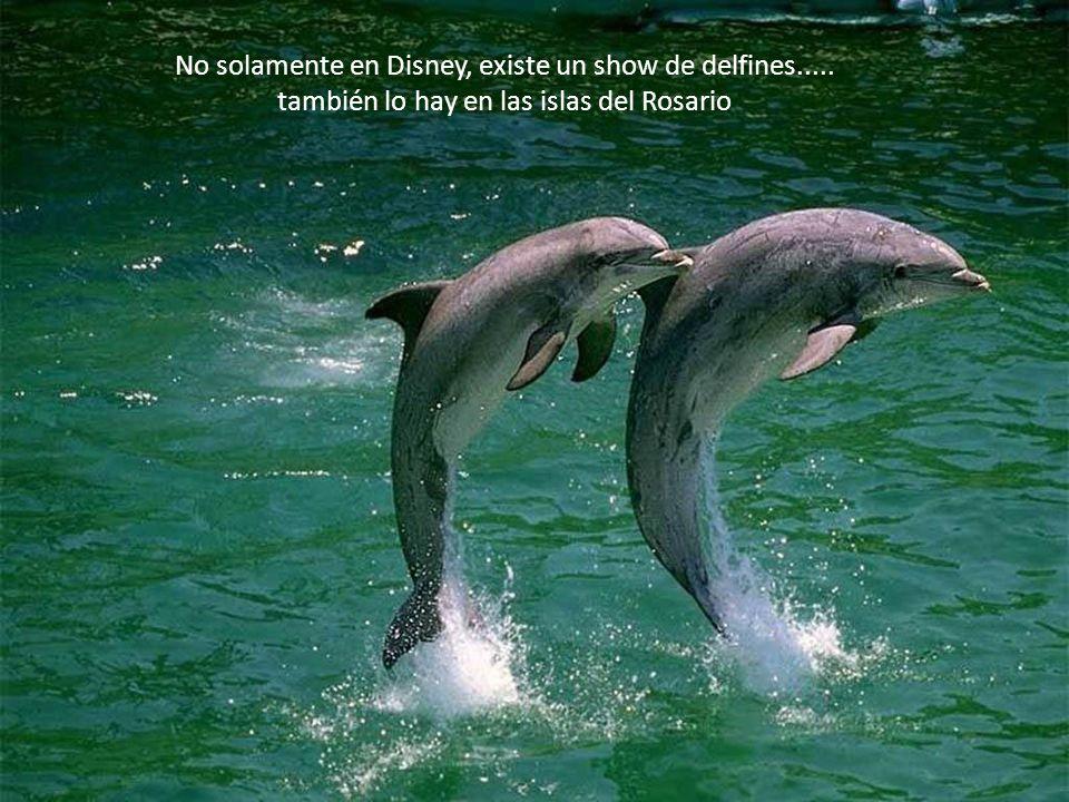 No solamente en Disney, existe un show de delfines.....