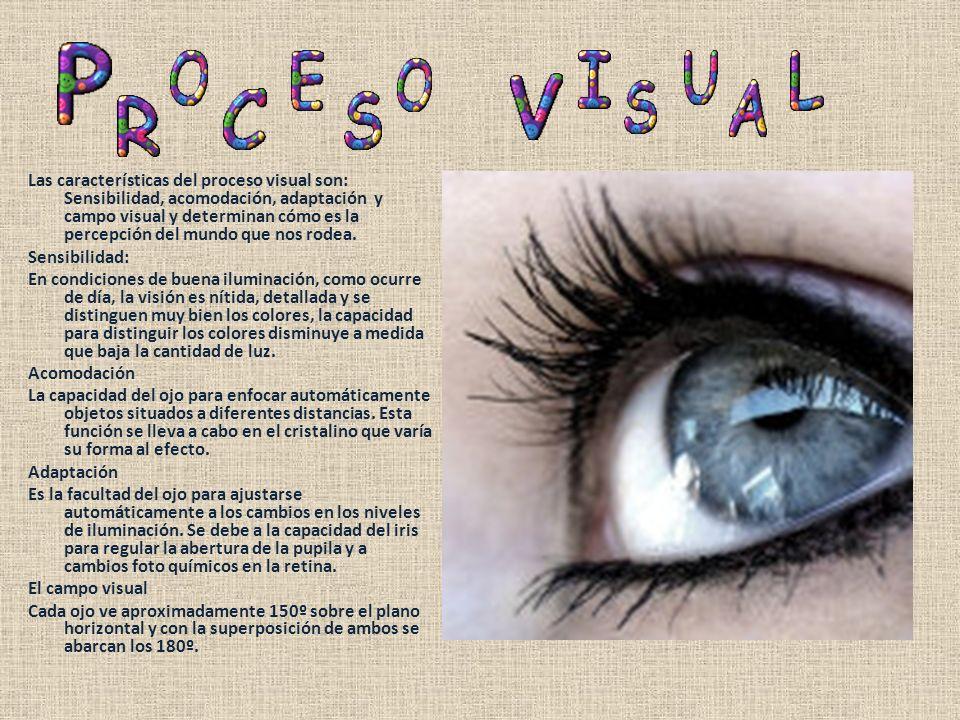 Las características del proceso visual son: Sensibilidad, acomodación, adaptación y campo visual y determinan cómo es la percepción del mundo que nos rodea.