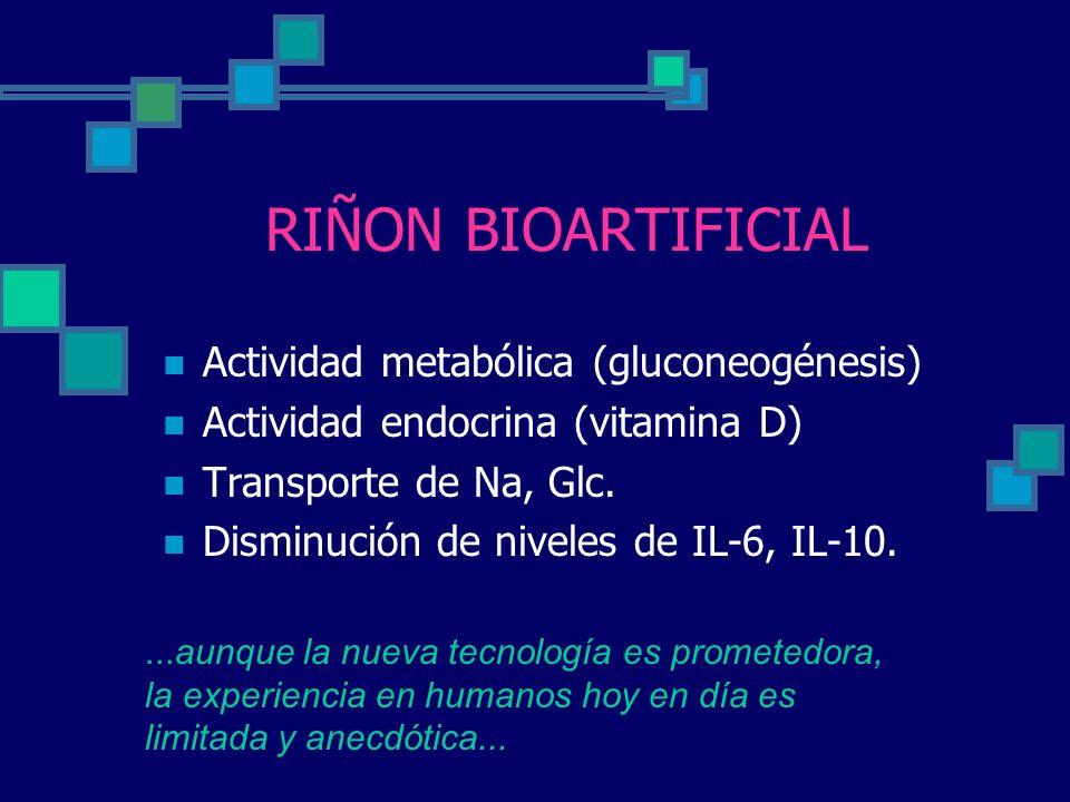 RIÑON BIOARTIFICIAL Actividad metabólica (gluconeogénesis)