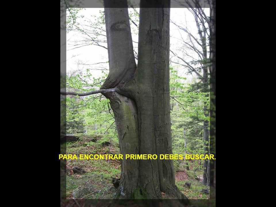 PARA ENCONTRAR PRIMERO DEBES BUSCAR.