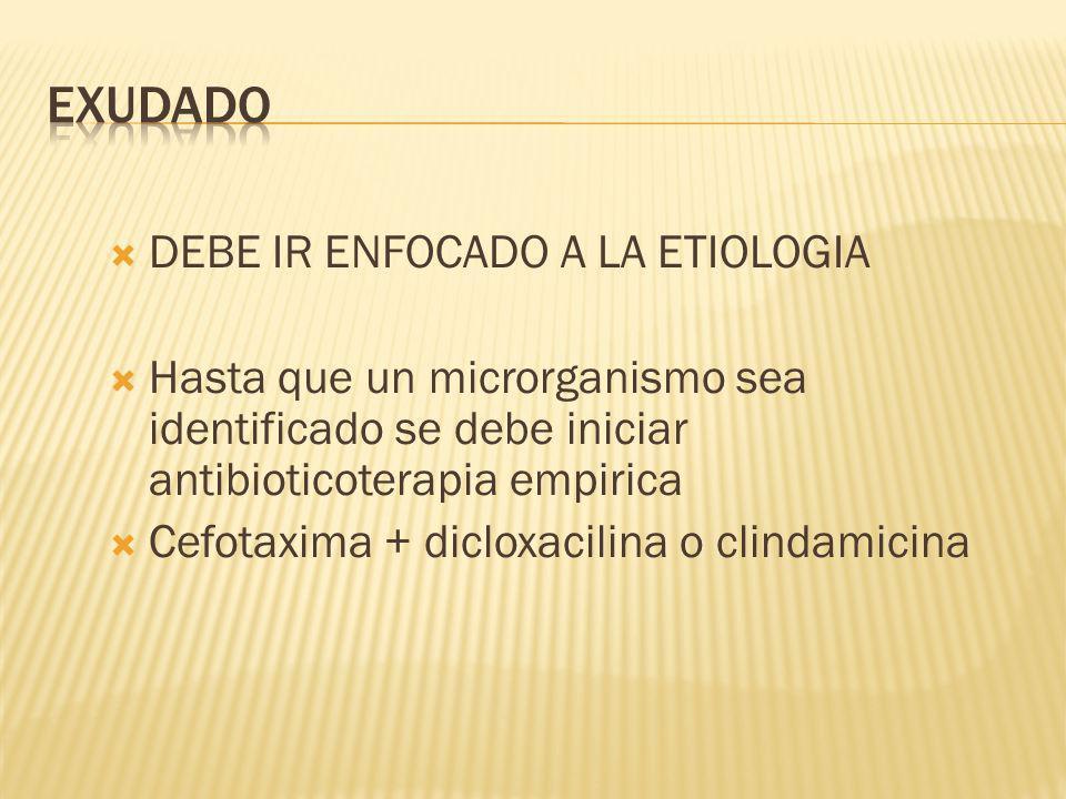 EXUDADO DEBE IR ENFOCADO A LA ETIOLOGIA