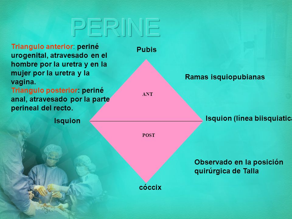 PERINE Triangulo anterior: periné urogenital, atravesado en el hombre por la uretra y en la mujer por la uretra y la vagina.