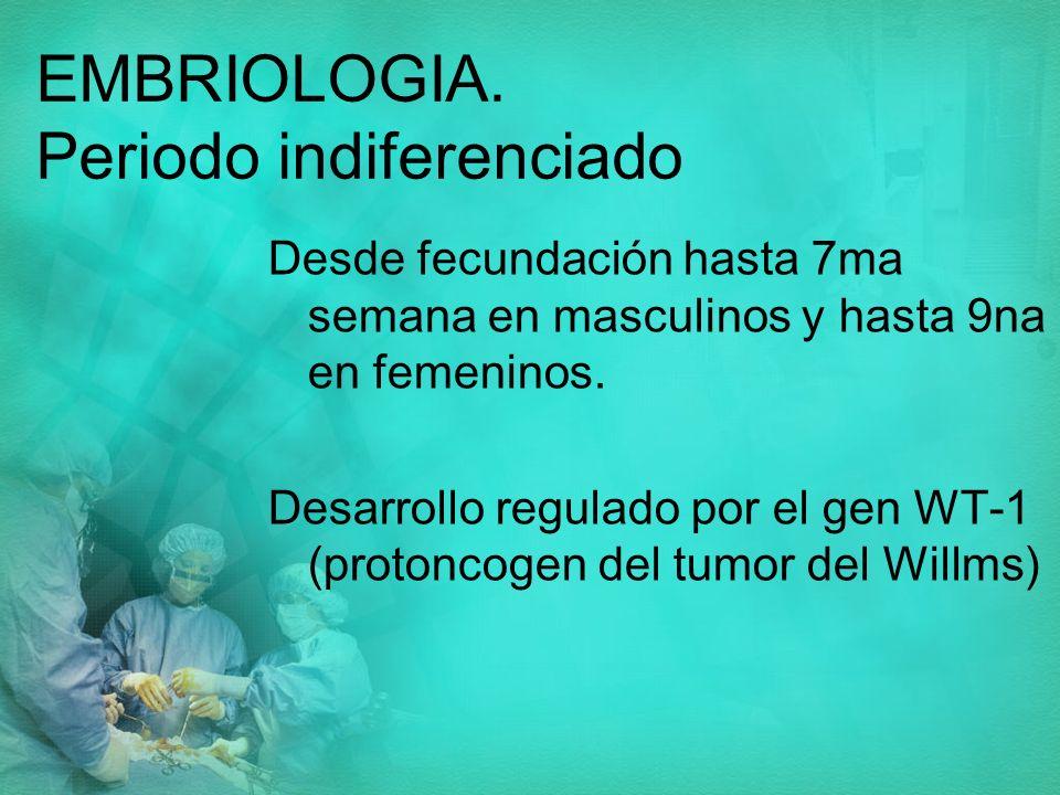 EMBRIOLOGIA. Periodo indiferenciado