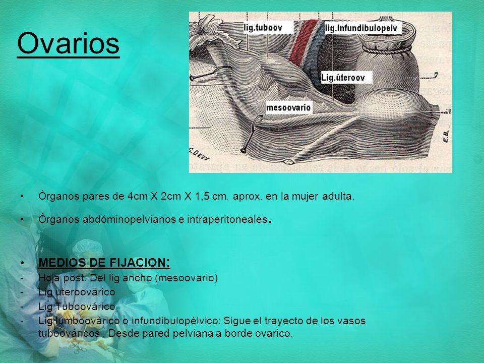 Ovarios MEDIOS DE FIJACION: