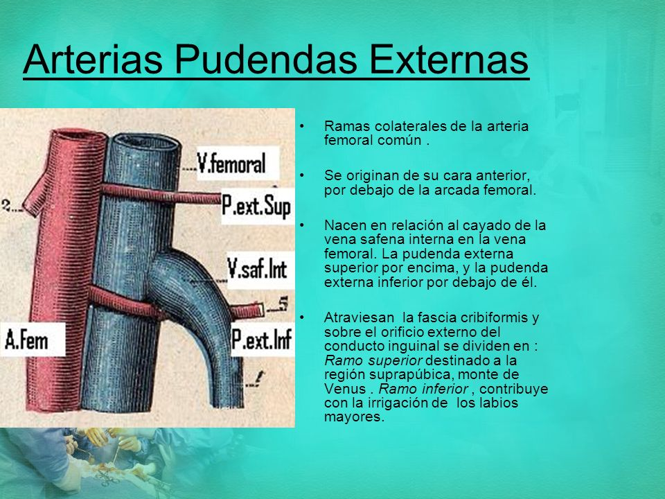 Arterias Pudendas Externas