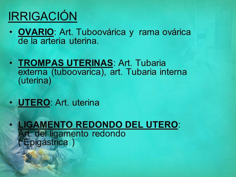 IRRIGACIÓN OVARIO: Art. Tuboovárica y rama ovárica de la arteria uterina.