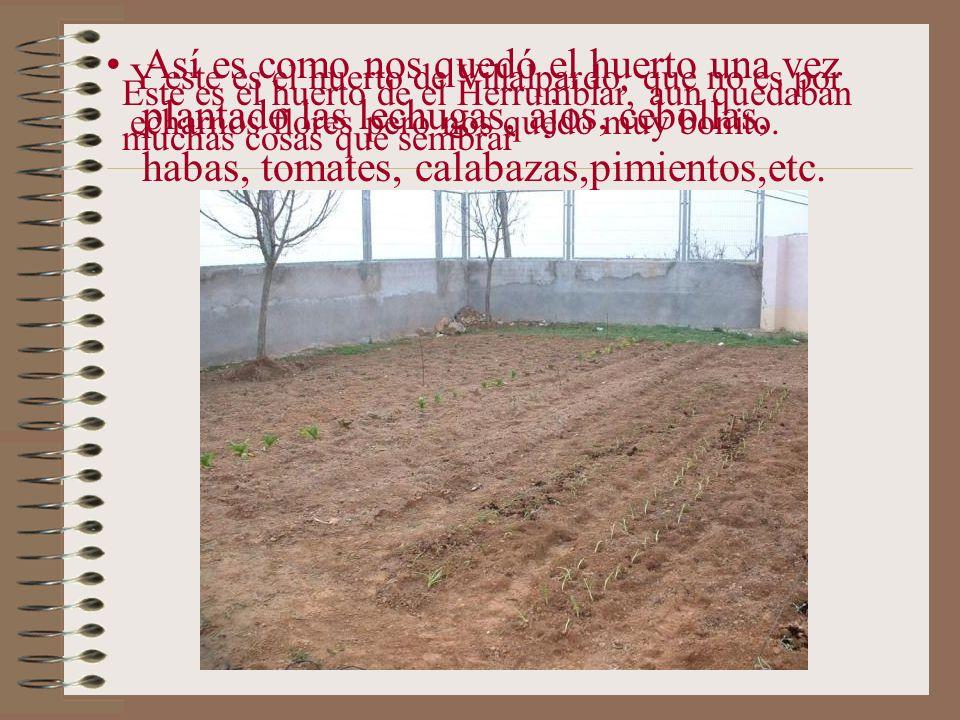 Así es como nos quedó el huerto una vez plantado las lechugas, ajos, cebollas, habas, tomates, calabazas,pimientos,etc.