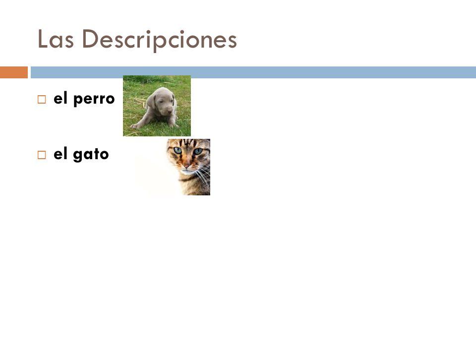 Las Descripciones el perro el gato