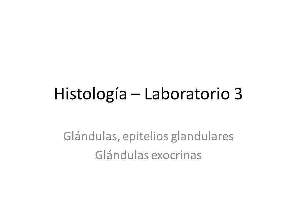 Histología – Laboratorio 3