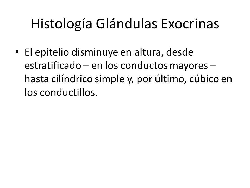 Histología Glándulas Exocrinas