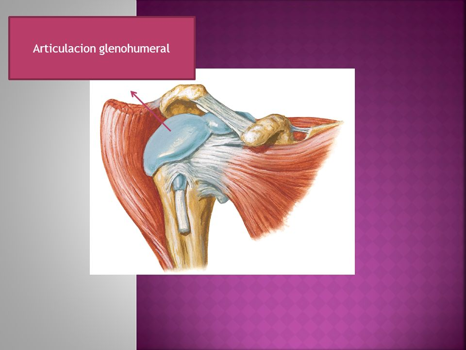 Articulacion glenohumeral