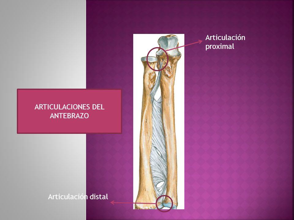ARTICULACIONES DEL ANTEBRAZO