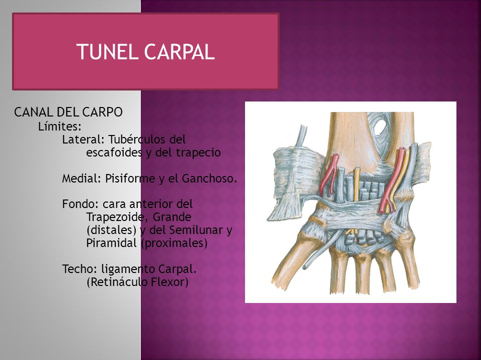 TUNEL CARPAL CANAL DEL CARPO Límites: