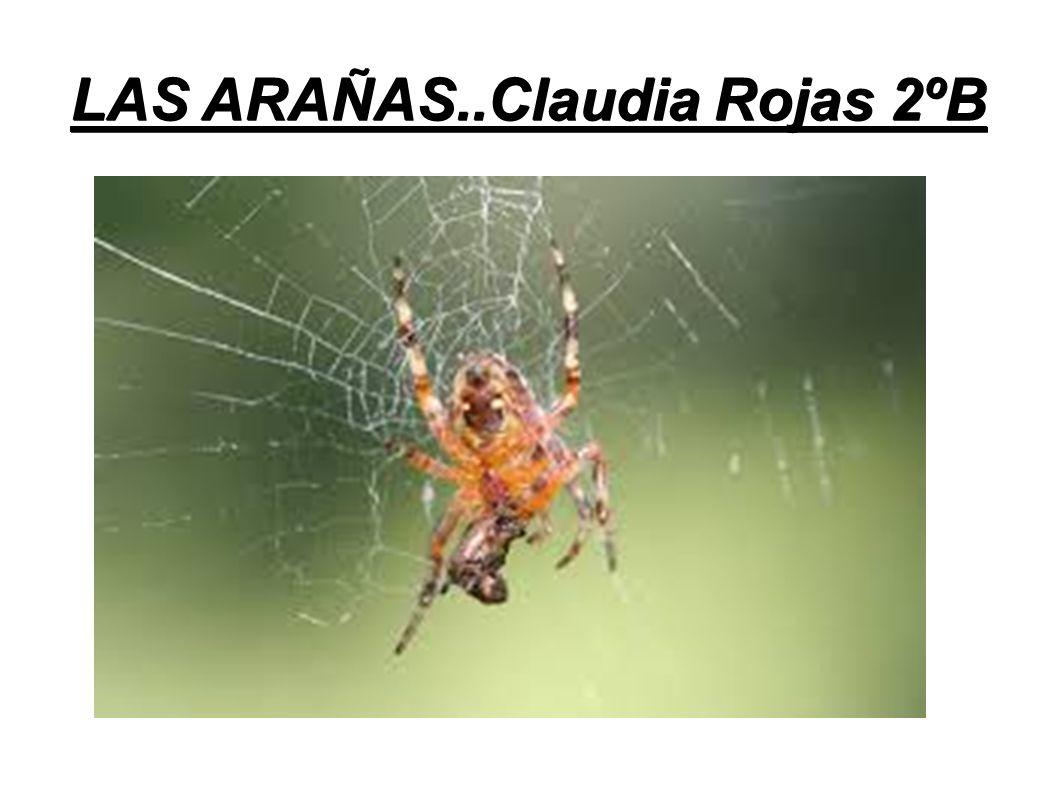 LAS ARAÑAS..Claudia Rojas 2ºB - ppt video online descargar
