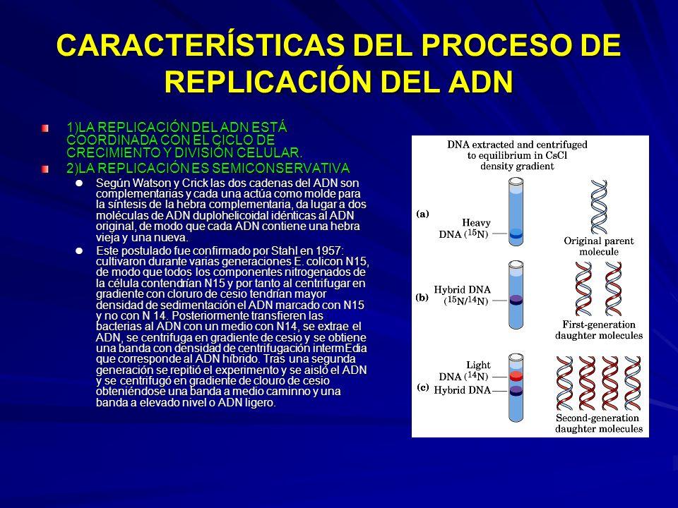 CARACTERÍSTICAS DEL PROCESO DE REPLICACIÓN DEL ADN