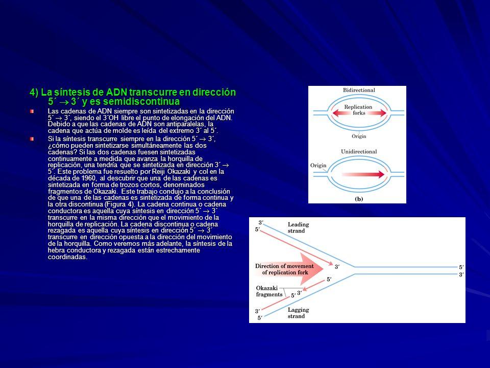 4) La síntesis de ADN transcurre en dirección 5´  3´ y es semidiscontinua