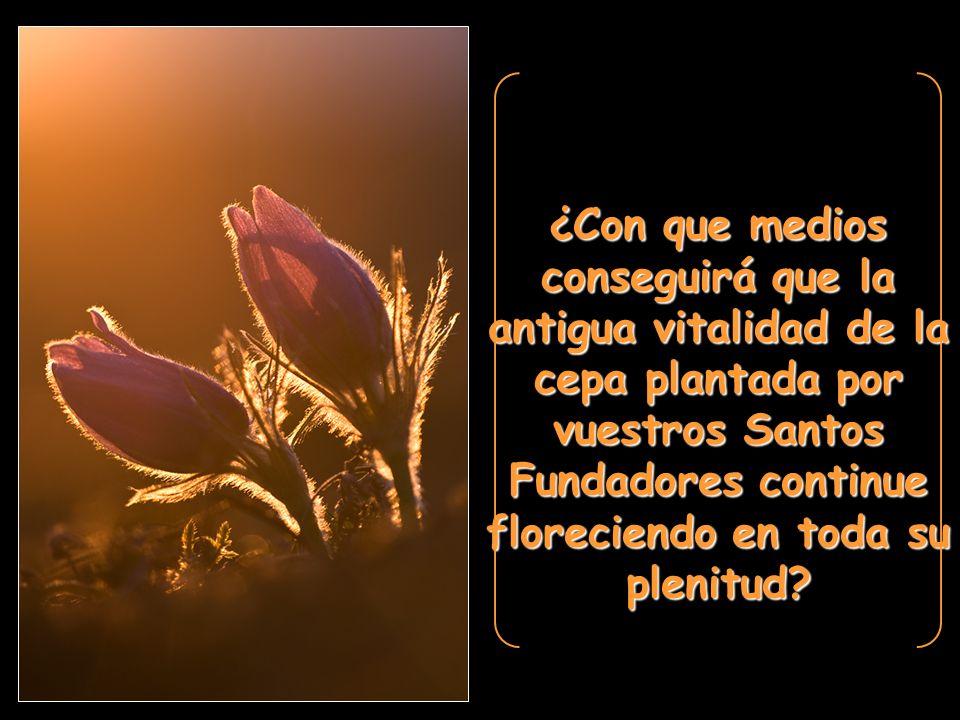 ¿Con que medios conseguirá que la antigua vitalidad de la cepa plantada por vuestros Santos Fundadores continue floreciendo en toda su plenitud