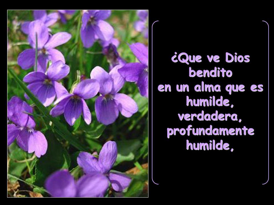 ¿Que ve Dios bendito en un alma que es humilde,