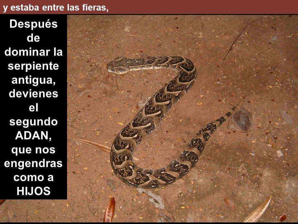 Después de dominar la serpiente antigua,