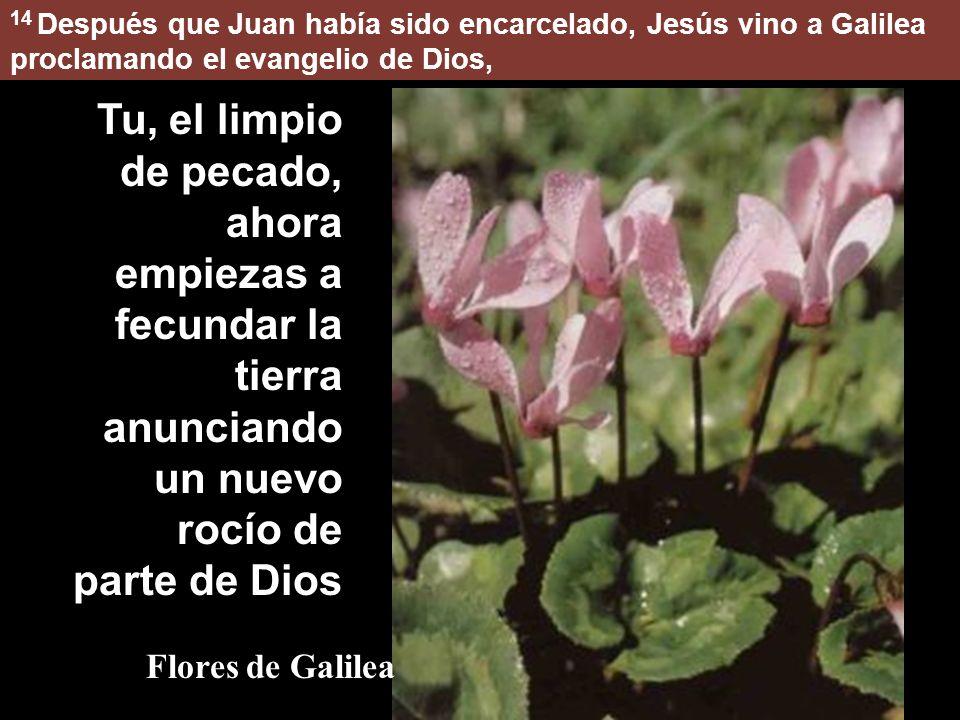 14 Después que Juan había sido encarcelado, Jesús vino a Galilea proclamando el evangelio de Dios,