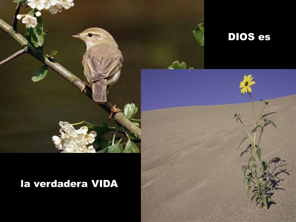 DIOS es la verdadera VIDA