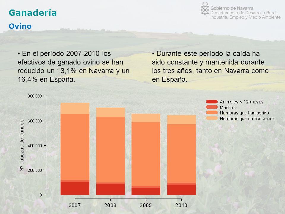 Ganadería Ovino. En el período 2007-2010 los efectivos de ganado ovino se han reducido un 13,1% en Navarra y un 16,4% en España.