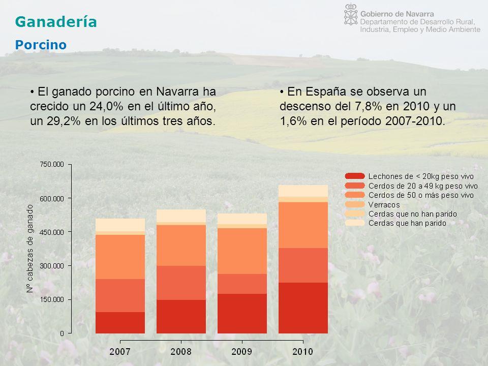Ganadería Porcino. El ganado porcino en Navarra ha crecido un 24,0% en el último año, un 29,2% en los últimos tres años.