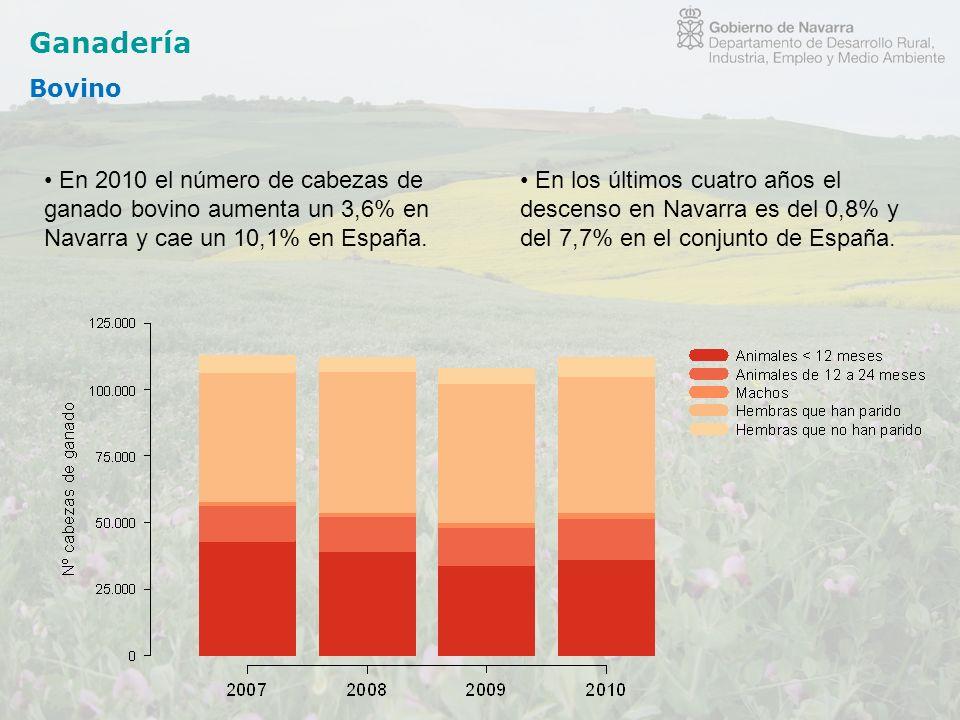 Ganadería Bovino. En 2010 el número de cabezas de ganado bovino aumenta un 3,6% en Navarra y cae un 10,1% en España.