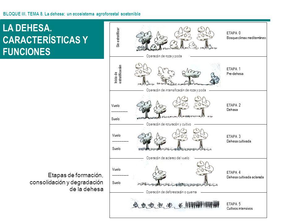 LA DEHESA. CARACTERÍSTICAS Y FUNCIONES