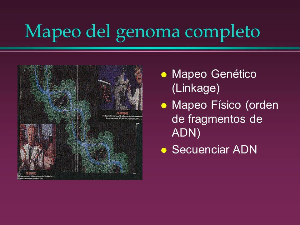 Mapeo del genoma completo