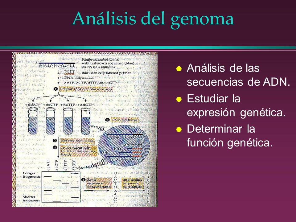 Análisis del genoma Análisis de las secuencias de ADN.