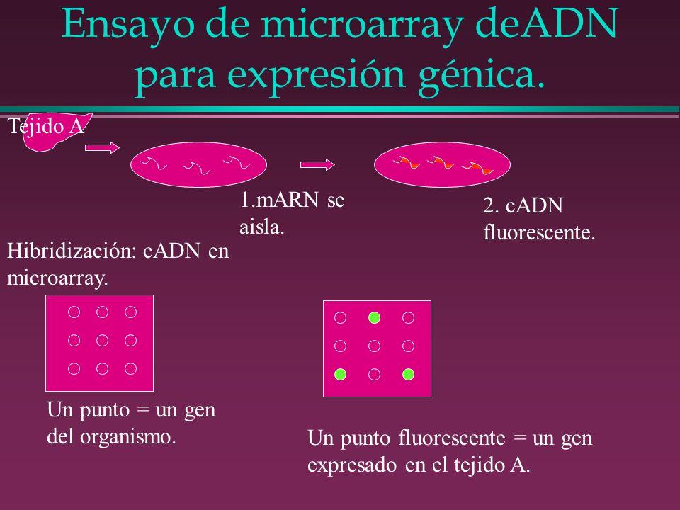 Ensayo de microarray deADN para expresión génica.