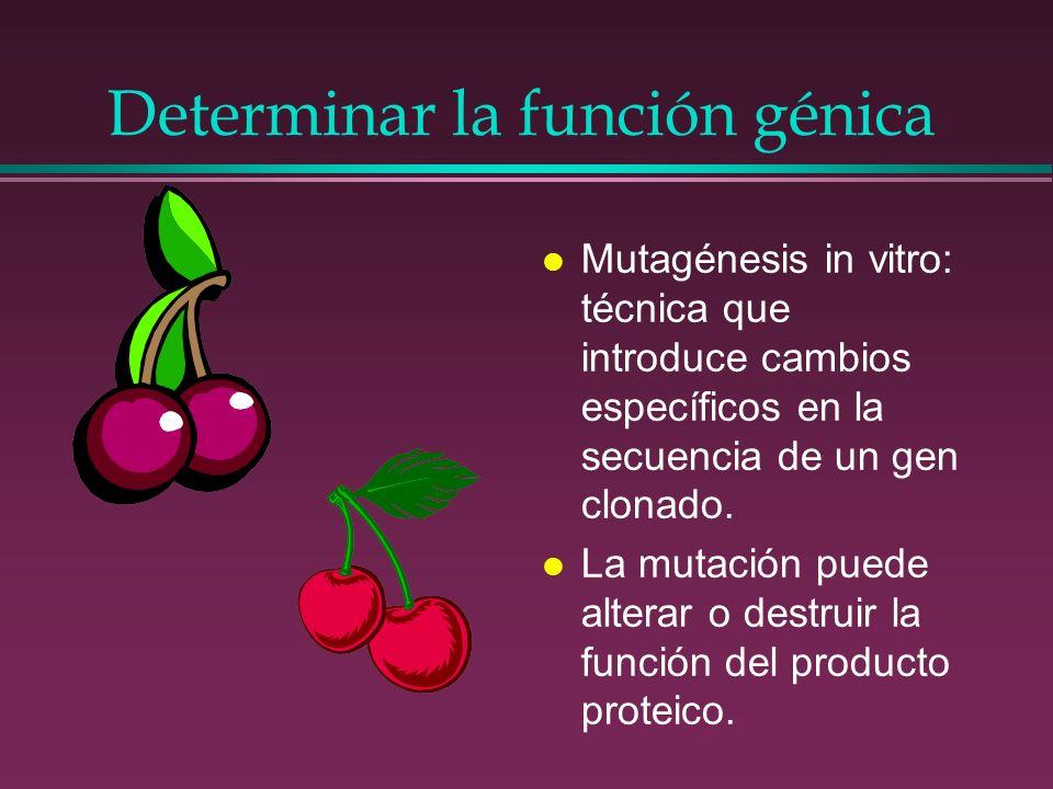 Determinar la función génica