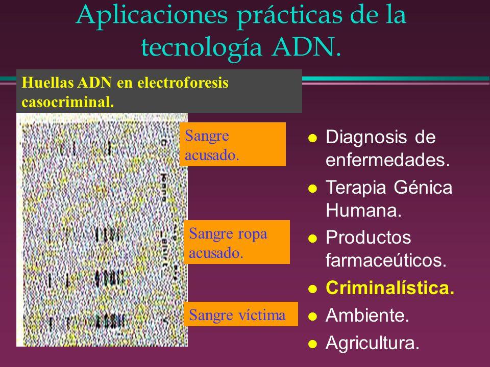 Aplicaciones prácticas de la tecnología ADN.
