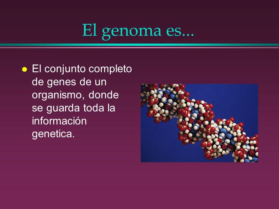 El genoma es...