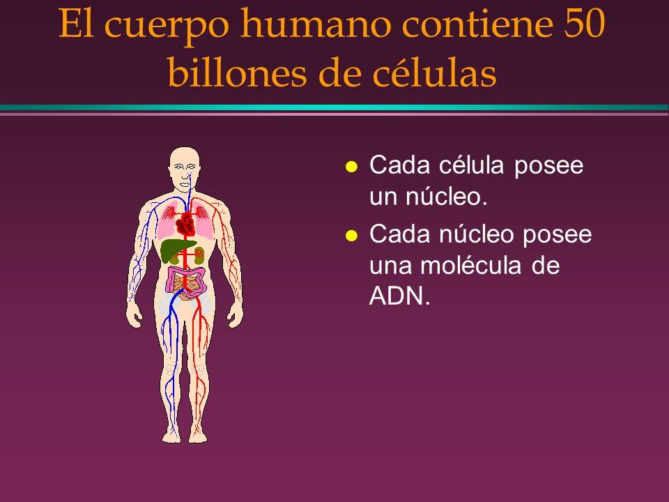 El cuerpo humano contiene 50 billones de células