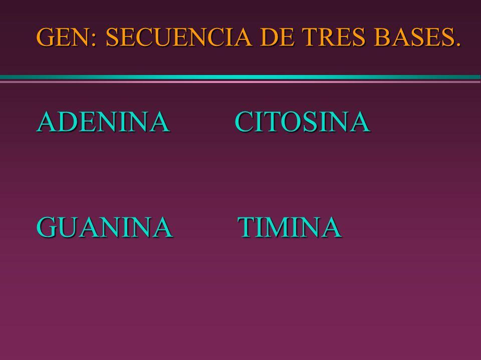 GEN: SECUENCIA DE TRES BASES.