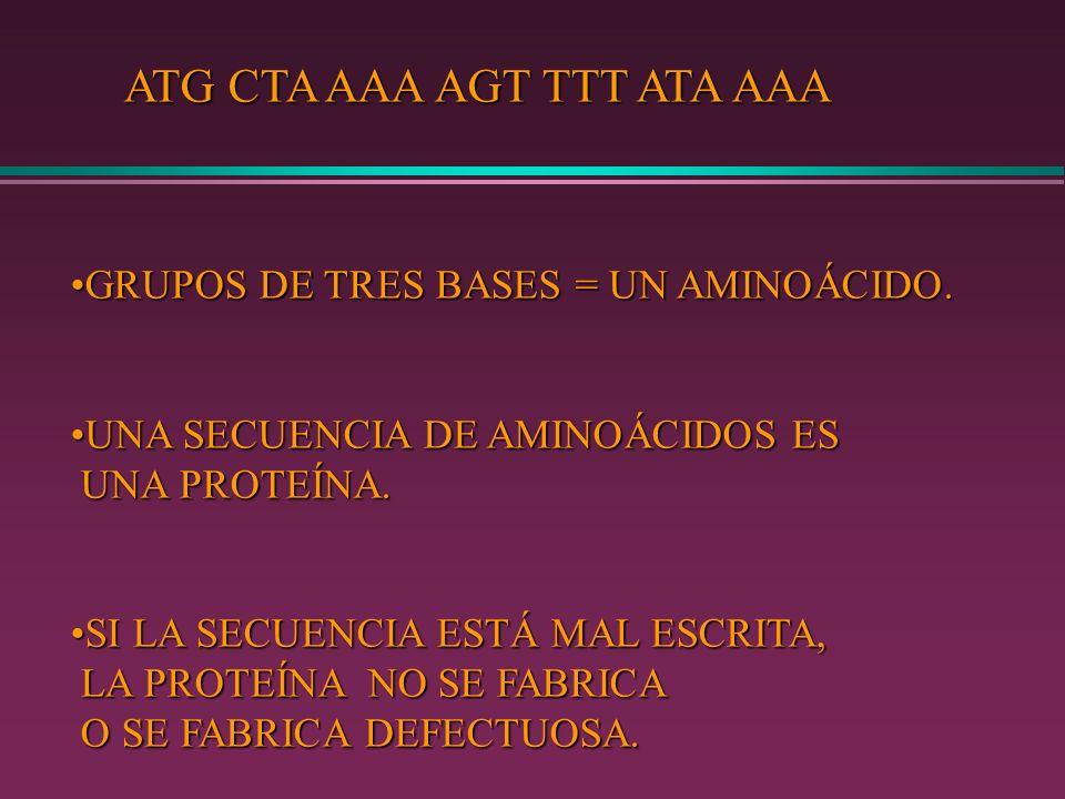 ATG CTA AAA AGT TTT ATA AAA